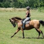 Centre equestre a proximite