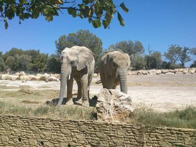 Reserve africaine location mobil home carabasse vias mediterannee